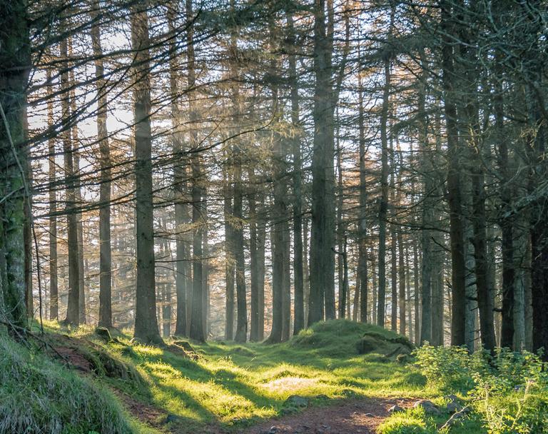 Woods-768x608